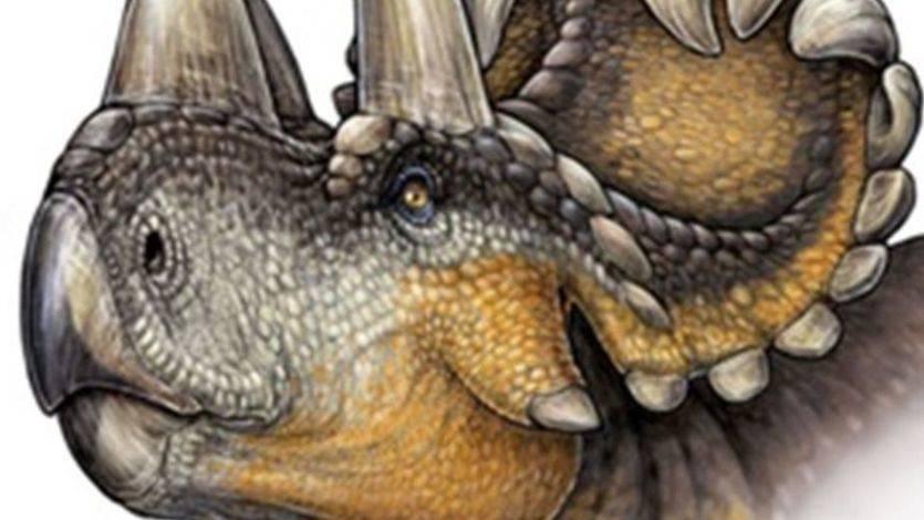 Descubren un nuevo dinosaurio con cuernos y pico de loro: el Wendiceratops