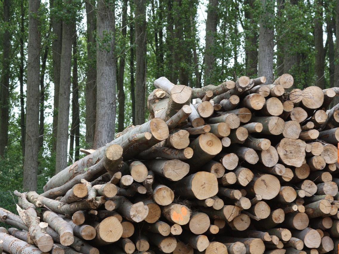 EMPRENDEbiomasa da un impulso a las mejores ideas de negocio en torno a la biomasa