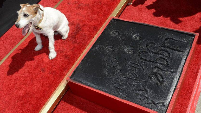 Muere Uggie, el perro de 'The Artist'
