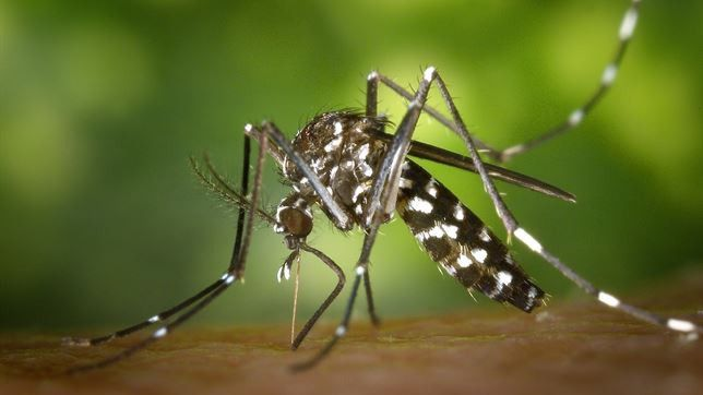 Primer infectado por el virus chikungunya en España