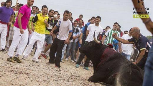 'Rompe-suelas', el animal a sacrificar en la polémica del día: el Toro de la Vega