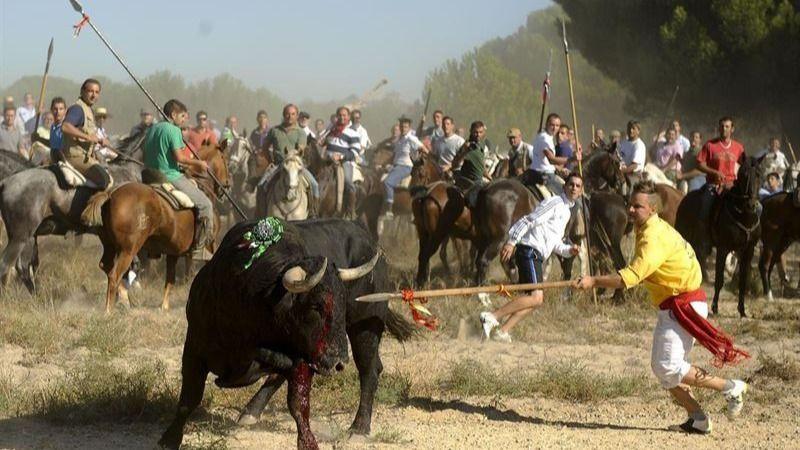 El Toro de la Vega de 2014 se celebró de forma ilegal: el juez falla a favor del PACMA