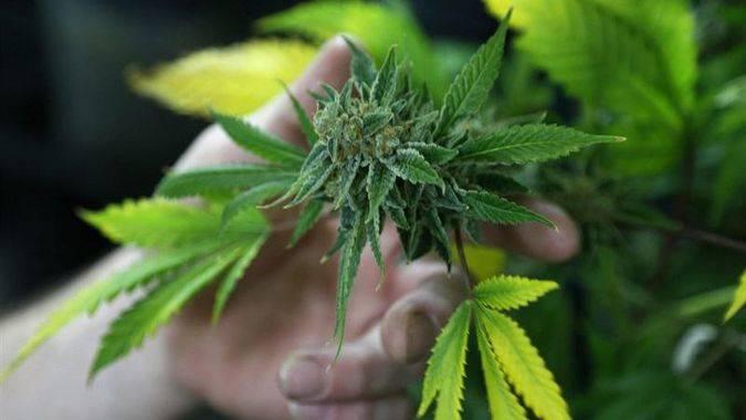El Tribunal Supremo mexicano avala el uso de la marihuana con fines lúdicos