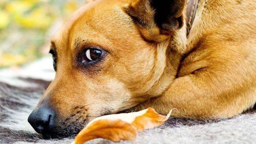 Un estudio demuestra que los perros sí saben cómo se siente su dueño