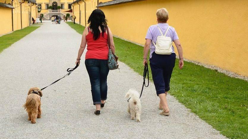 Canguros de mascotas: la alternativa a las residencias de animales