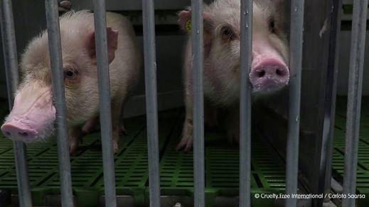 Madrid suspende la actividad del laboratorio Vivotecnia por indicios de maltrato animal