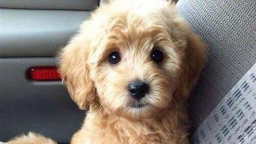 ¿Cuán listo es tu perro?: puedes medir su cociente intelectual
