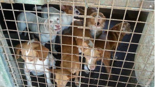 El PACMA denuncia el inminente abandono y muerte de miles de perros de caza