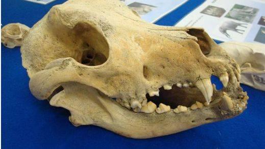 ¿Quiere buscar fósiles con millones de años?: la nueva edición de la Feria Natura regala esta novedad