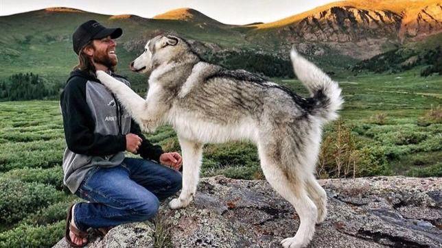 10 consejos para educar a tu perro y evitar comportamientos agresivos