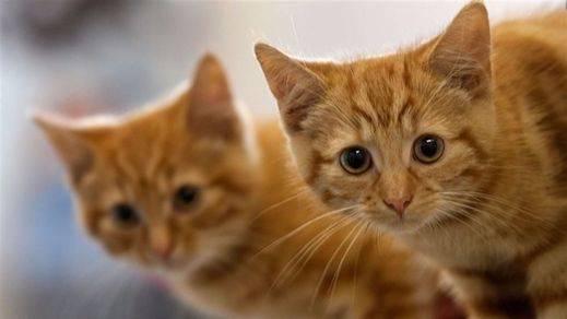 Consejos para aumentar tu 'familia gatuna' cuando ya hay un felino en casa