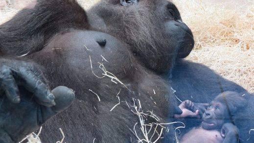 El público del Zoo Aquarium de Madrid recibe a un nuevo miembro de la familia