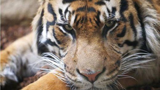 El hombre y su sobreexplotación, principales amenazas de las especies en peligro de extinción