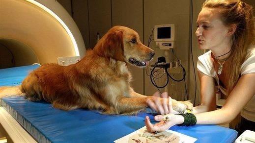 Los perros entienden el habla humana