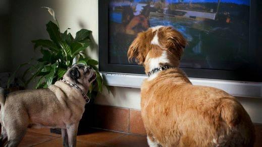 ¿Pueden ver la televisión los perros?