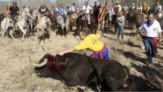 Todos vigilarán hoy Tordesillas: primer Toro de la Peña donde el animal no debería morir en el campo