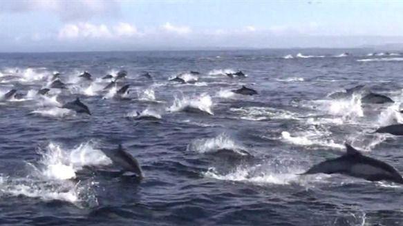 Descifrando el idioma de los delfines