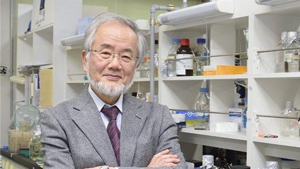 Sus investigaciones sobre la autofagia dan a Yoshinori Ohsumi el Nobel de Medicina