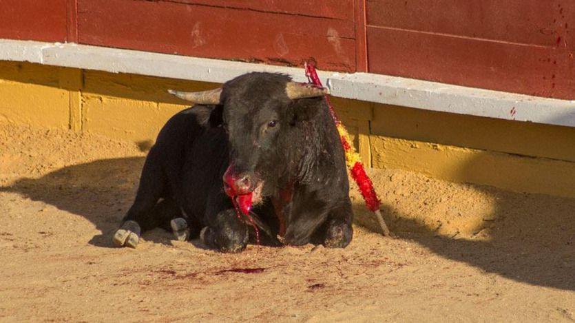 El Pacma denuncia en Castilla-La Mancha el 'maltrato a los animales' e 'irregularidades' en 5 encierros