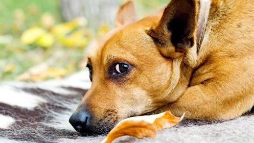 Las mascotas y el otoño: cuidados frente al frío y la humedad