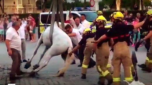 PACMA denuncia en un vídeo la explotación animal de los coches de caballos en Sevilla