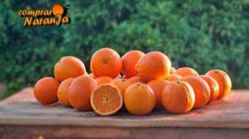Comienza la temporada de comprar naranjas, el gran aliado para evitar resfriados en invierno