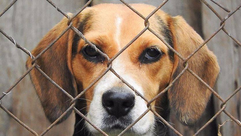 La proliferación de casos de maltrato animal: una cuestión de salud social