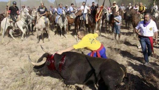 El Constitucional pone punto final a la polémica: el toro de la Vega no morirá en Tordesillas