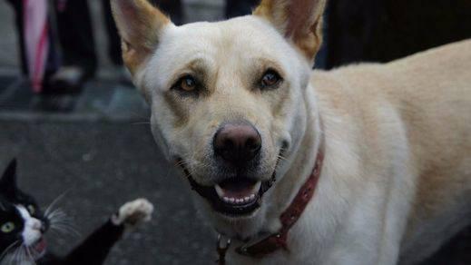 Condenada a 3 años y 9 meses de prisión por matar a más de 2.000 perros y gatos