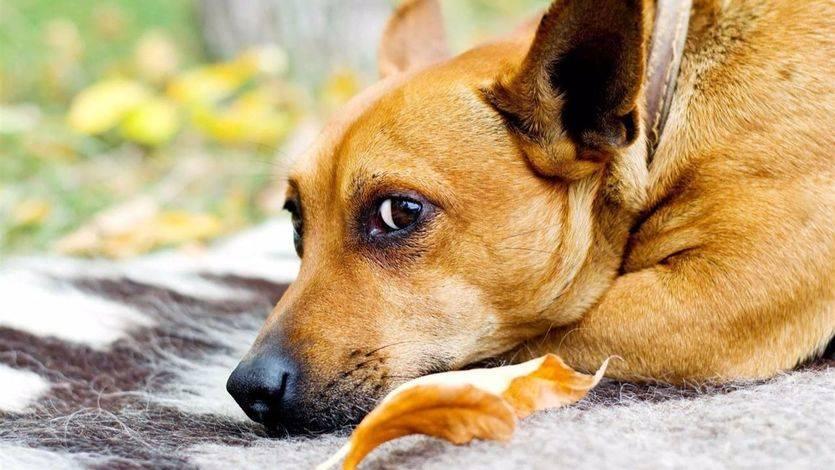 Ciudadanos pide que las mascotas dejen de ser 'cosas' en la ley, pero permite los toros