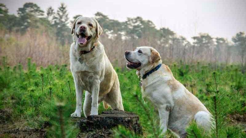¿Puede mi mascota ser mi heredero? ¿Y se puede reclamar su custodia en caso de divorcio?