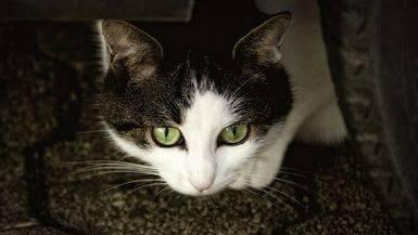 Consejos para la llegada de tu gato a casa