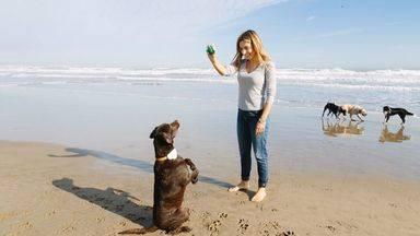 Una startup española lanza un innovador geolocalizador de mascotas