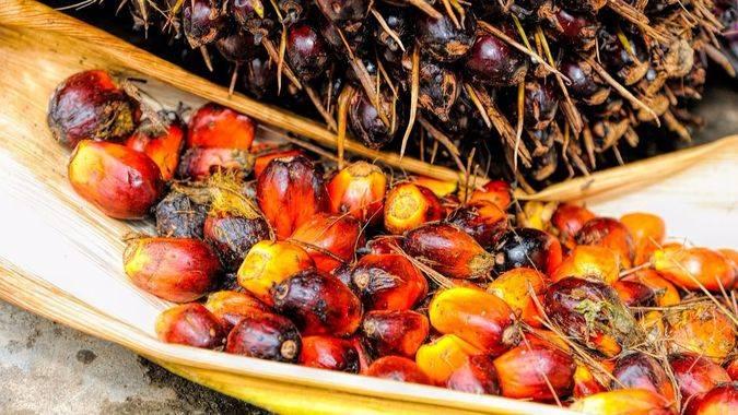 El aceite de palma: el nuevo enemigo público al que ahora todos odian... ¿es tan perjudicial?