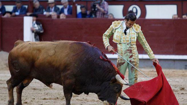 David Mora muletea al toro al que cortó una oreja