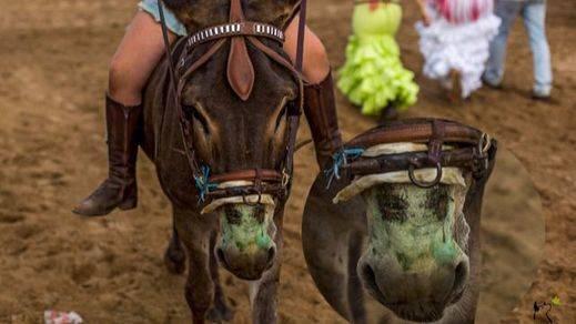 El Rocío vuelve a dejar muertes animales por agotamiento: el lado oscuro de las romerías