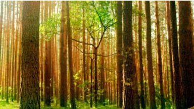 17-J: Bosques Sostenibles y Lanjarón lanzan la campaña ''Tuits contra la deforestación' #NoTreesNoBirds