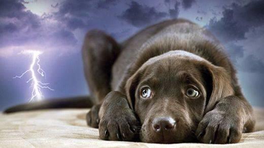 Vetermascotas: 'No es conveniente el uso de tranquilizantes cuando los perros tienen miedo'