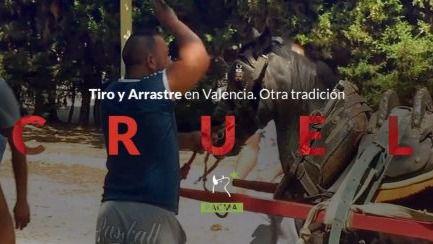 PACMA denuncia el maltrato al que son sometidos los caballos en el tiro y arrastre (vídeo)