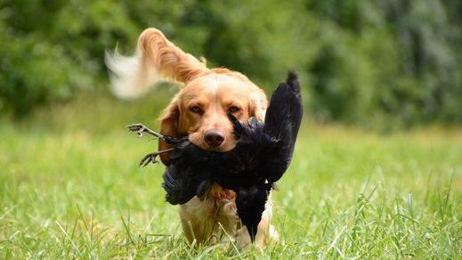 La Federación de Caza presenta alegaciones al borrador de Ley de Bienestar Animal