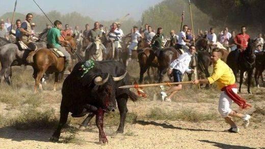 Por segundo año, Tordesillas celebrará el Toro de la Vega sin la muerte del astado