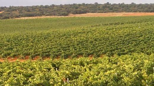 Castilla-La Mancha se vuelca con la promoción del turismo enológico