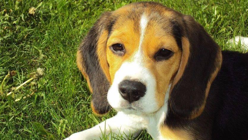 Las mascotas favorecen el crecimiento emocional de los niños