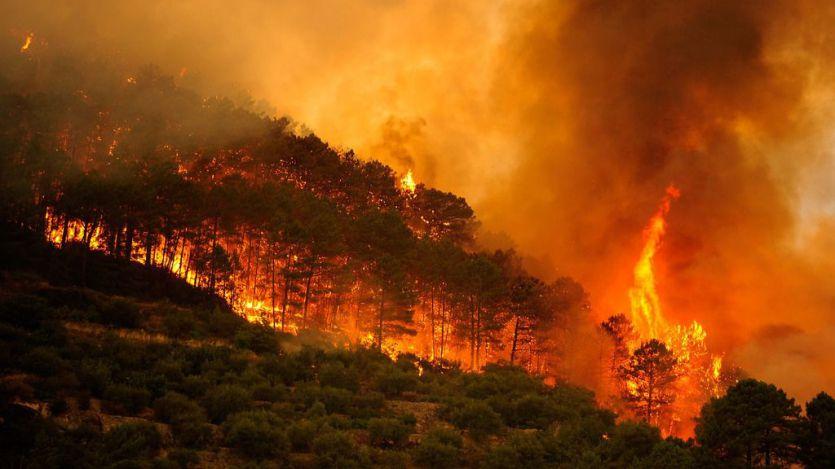 2017 ha sido el peor año en incendios forestales en España en una década