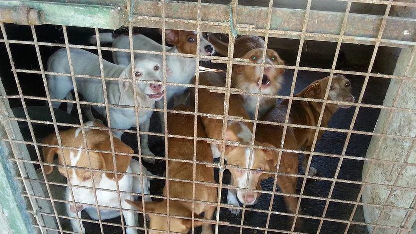 Condenan a un año y seis meses de cárcel a un cazador que maltrató a 55 perros
