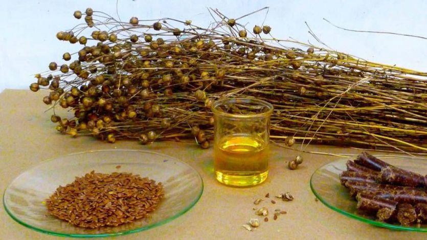 Importante avance para la extracción de vegetales de aceites ricos en omega 3