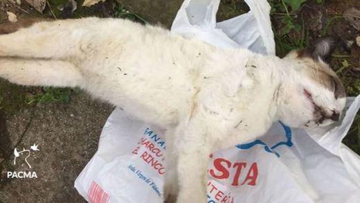 Denuncian nuevos envenenamientos de gatos en Córdoba