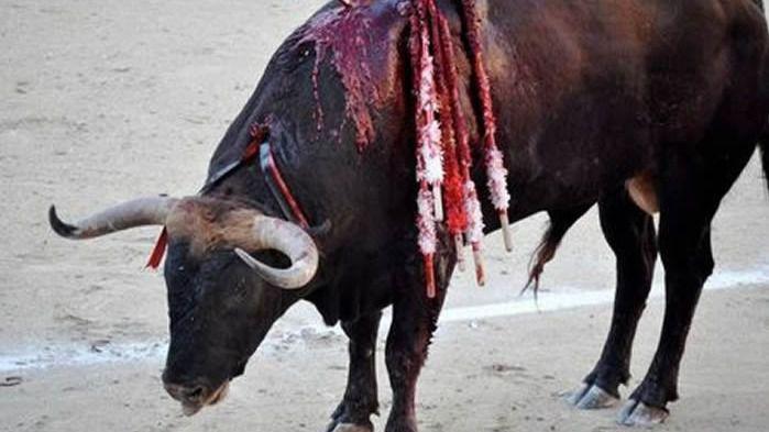 El Constitucional permite, por ahora, el veto de Baleares a las corridas con muerte del toro