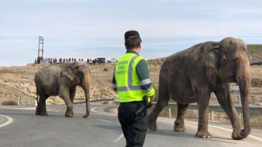 La presidenta de PACMA se desplaza a Albacete para conocer el estado de los elefantes