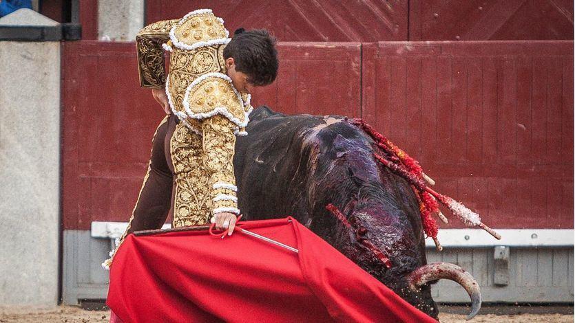 Daniel Luque muletea a su primer toro.